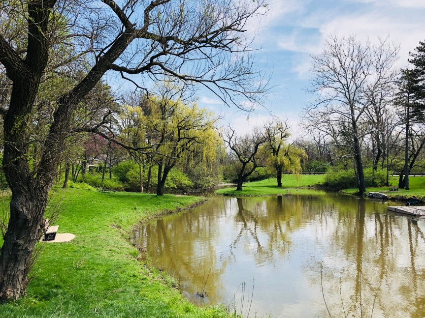 5 Ways to Have a Successful Walk in thePark